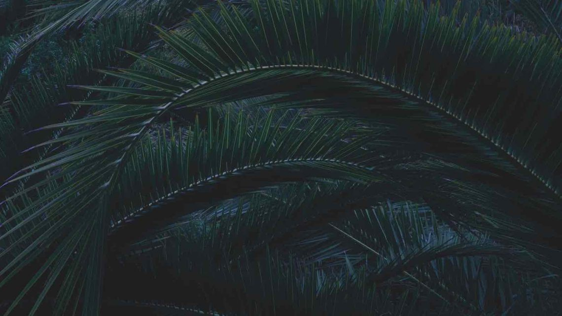 roslina-jungle-pismo-teneryfa