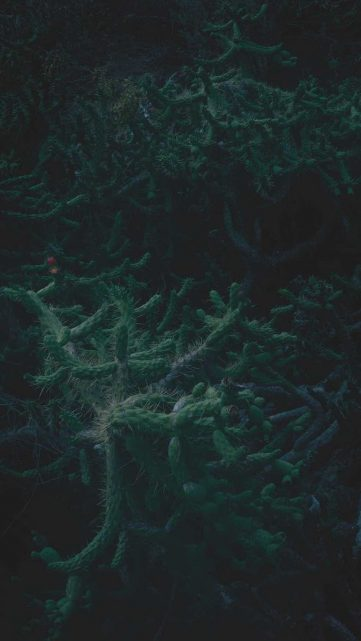 teneryfa-jungle-kaktus-pismo