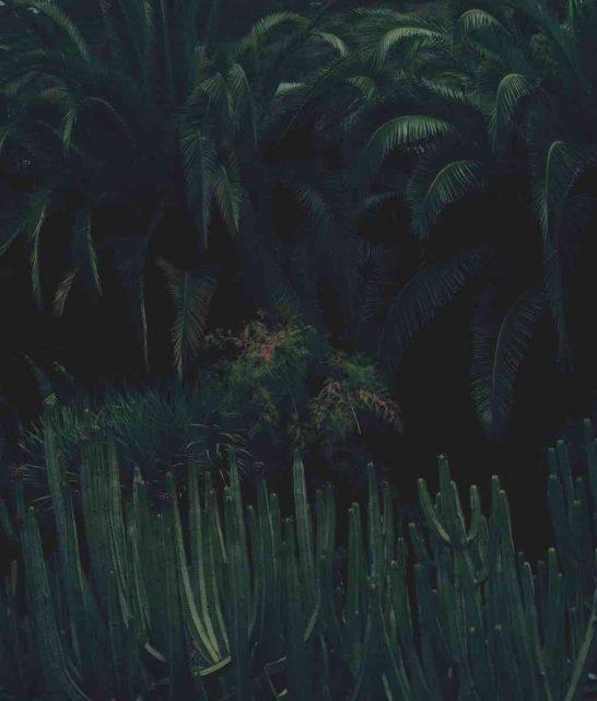 teneryfa-pismo-jungle-roslina