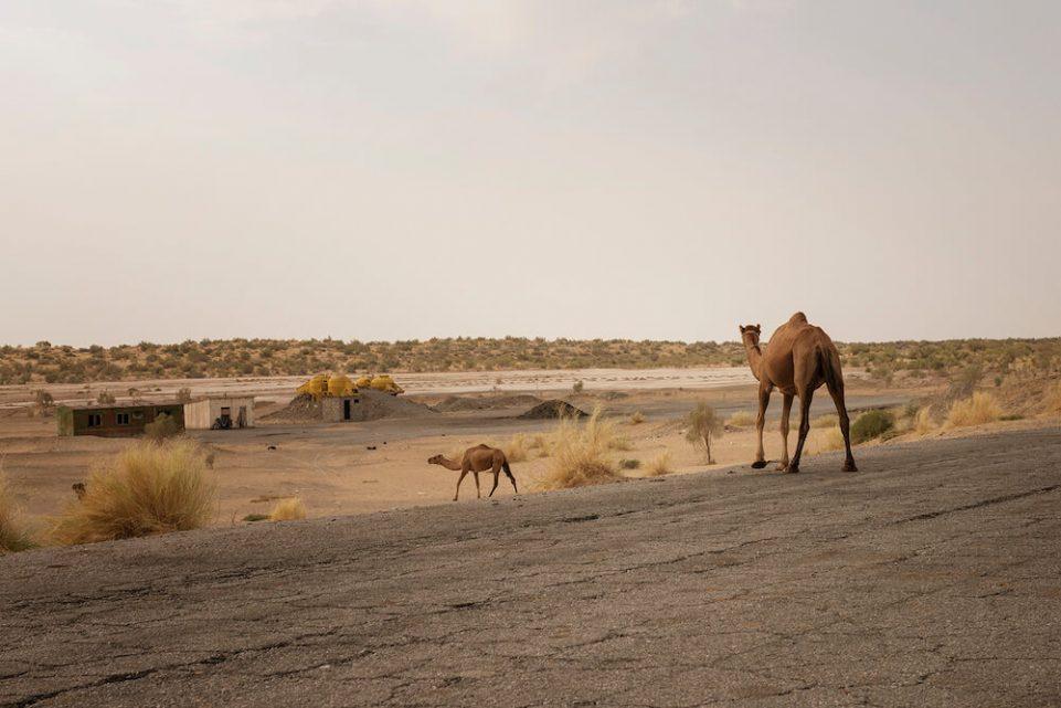 pustynia-wielblady-dromader-turkmenistan-droga-zdjecie-pismo
