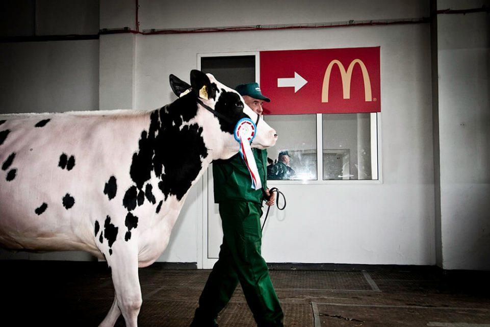poznan-krowa-konkurs-mcdonalds-fastfood-pismo-fotoreportaz