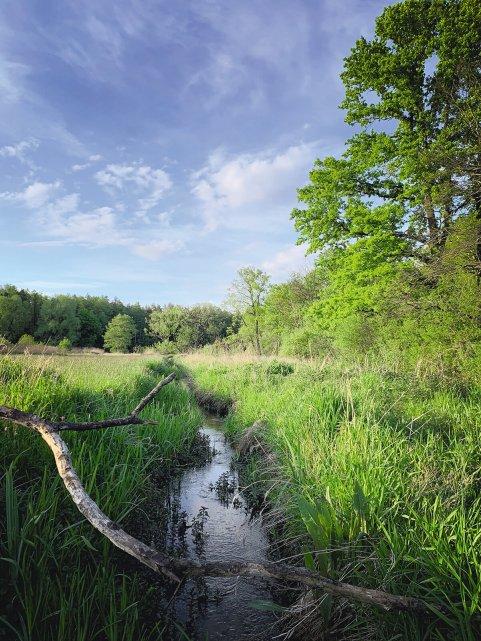 petryczkiewicz-niebo-wiosna-konstancin-mala-srodowisko