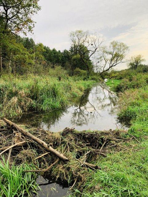petryczkiewicz-rzeka-bobry-konstancin-mala-srodowisko