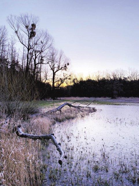 petryczkiewicz-rzeka-konstancin-mala-srodowisko-rozlewisko