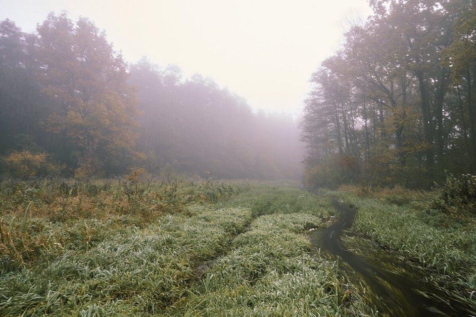 petryczkiewicz-rzeka-trawa-konstancin-mala-srodowisko