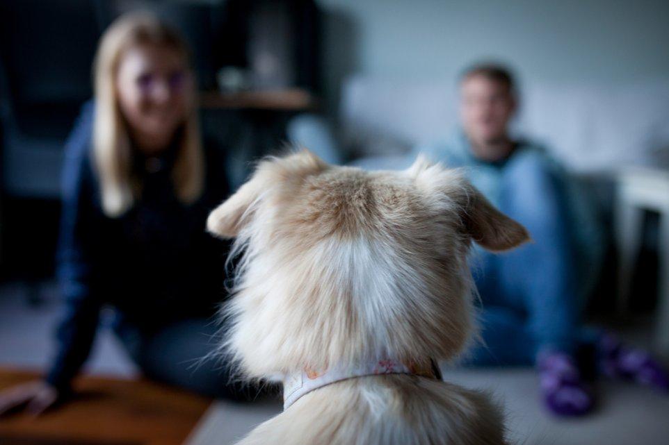 adopcja-pies-dom-zabawa-rodzina-malzenstwo-pismo