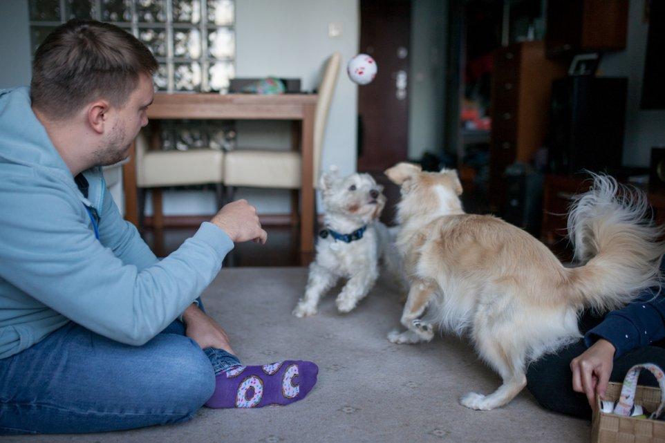 adoptowane-psy-dom-zabawa-zdjecie-pilka