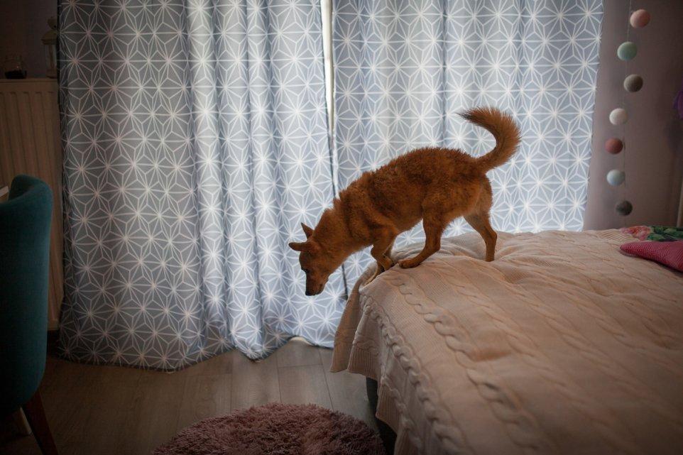 lozko-dom-adoptowany-pies-zabawa-pismo