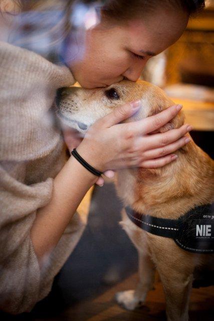 pies-adopcja-milosc-rodzina-dom-pismo-zdjecie