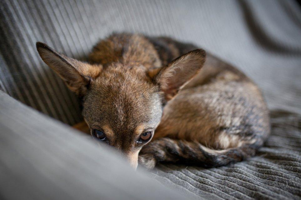 pies-adopcja-schronisko-dom-przemoc-przyjaciel-kundelek-pismo