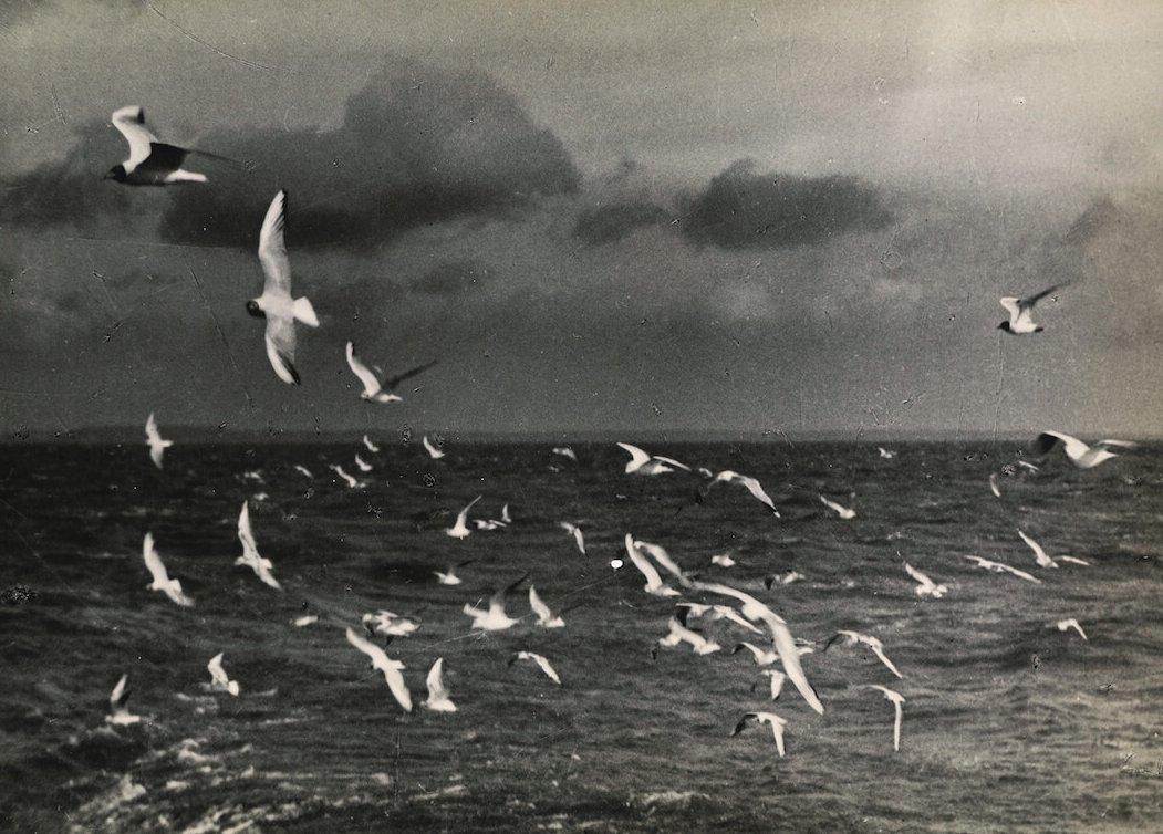 Zdjęcie rybitw nad morzem wykonane sprzętem analogowym.